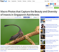 Macro Photos that Capture the Beauty and Diversity of Insects in Singapore's Rainforests