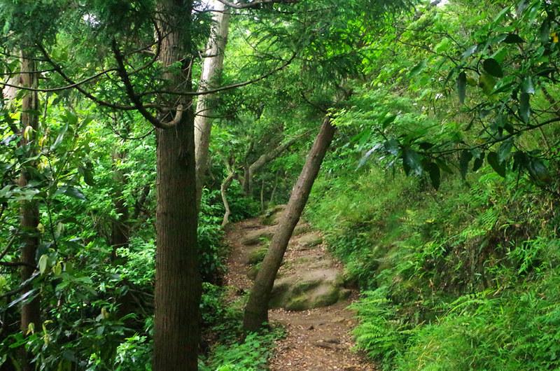 toomilog-tengoku_Hiking_trail011