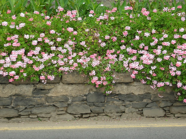 Kukkia muurilla, Nikon COOLPIX P5000