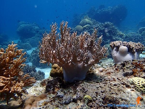 marine life at Terra Manna