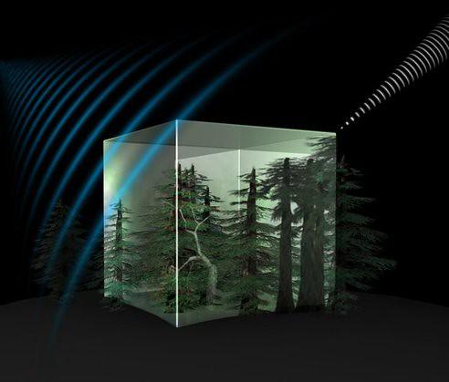 Спутник ЕКА оценит массу всех лесов мира с орбиты
