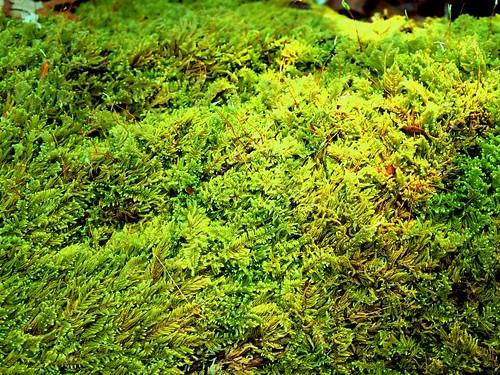 Moss#1