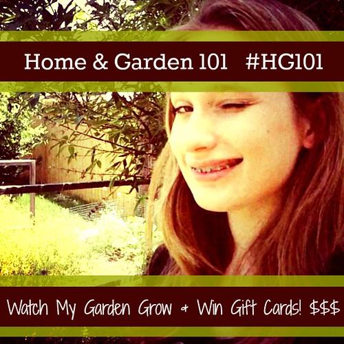 HG101