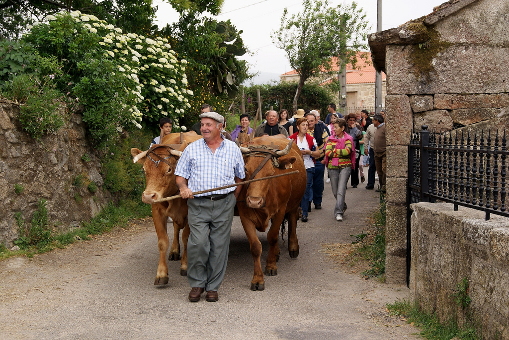 Procesión en la Fiesta del Carro. A Lama, Pontevedra. Autor, Gabriel González