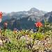 Davis Peak Hike - July 13, 2013