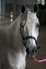 Horses - N.C. State Fairgrounds