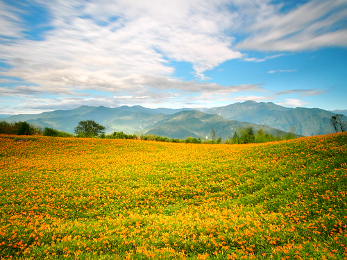day taiwan hualien hemerocallisfulva 六十石山 orangedaylily 60stonemountain pwpartlycloudy