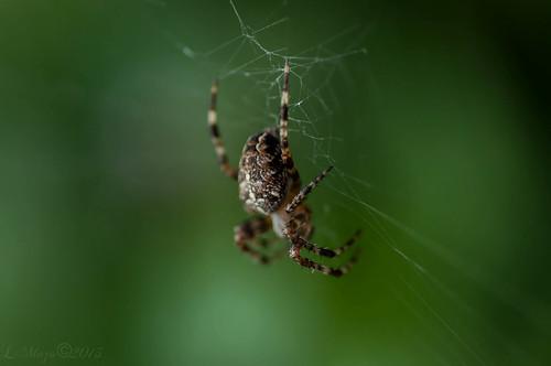 The bird a nest, the spider a web, man frindship ♥ ♥ ♥ by DanceofLifeImageMiner