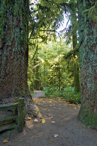 Cathedral Grove at MacMillan Park
