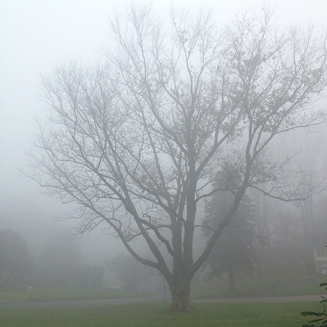 Beautiful fog this morning... #fog, #1000gifts