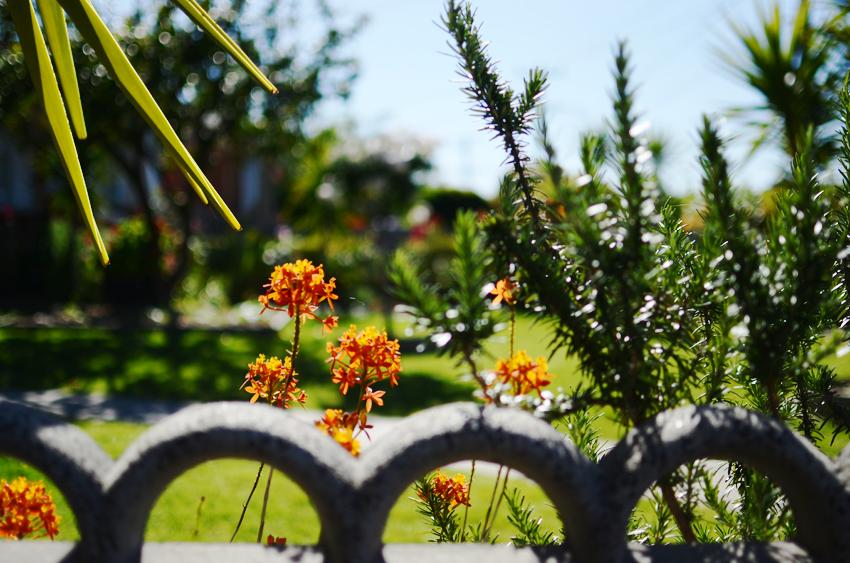 golden-garden b
