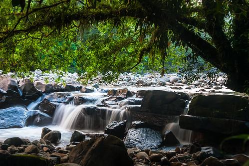 rainforest selva amazonas putumayo mocoa medioputumayo surdecolommbia