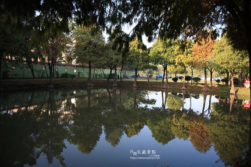 台南私藏景點--巴克禮落羽松 (13)