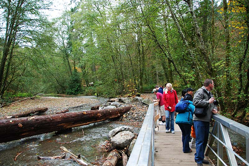 Salmon Spawn Viewing at Goldstream Provincial Park, Langford, Victoria, Vancouver Island, British Columbia, Canada