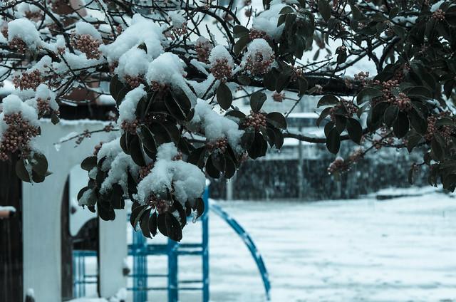 Snowyday_3