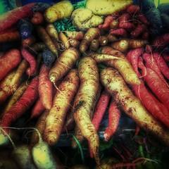 Carrots Galore