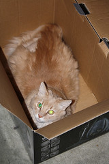 Evil Kitteh Is In His Box Lair ~ Champaz...