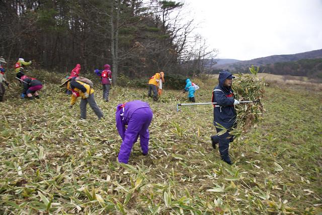 刈った草を集めて.隅へと運ぶ.思ったより重労働!