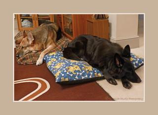 ..... Dogs Delightfully Dozing