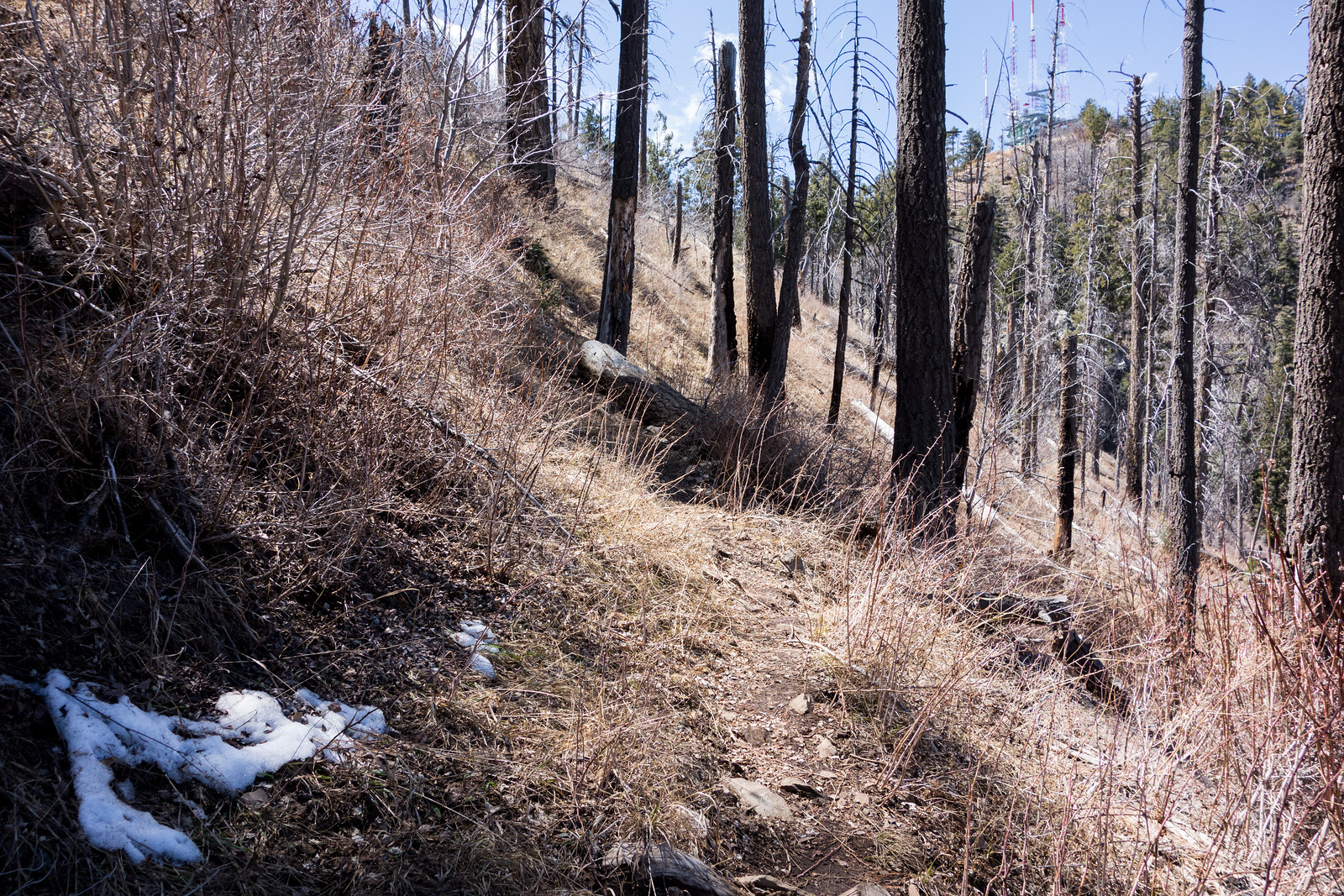 1404 A last Bit of Snow near the Butterfly Trail