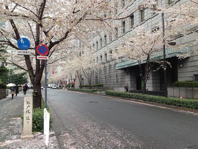 江戸桜通り, にほんばし, 桜花, 櫻花, 日本橋, 東京, 日本, Sakura, Nipponbashi, Tokyo, Japan