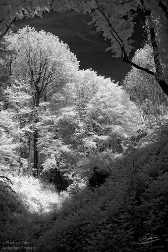 Fenster-Infrared.jpg