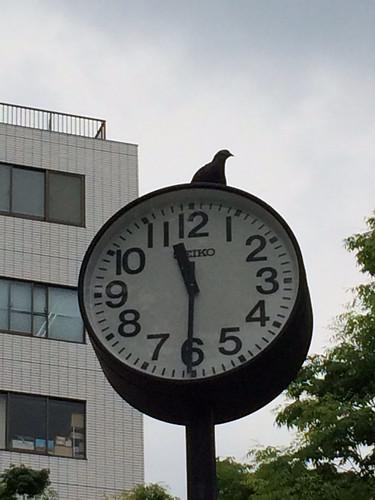 リアル鳩時計