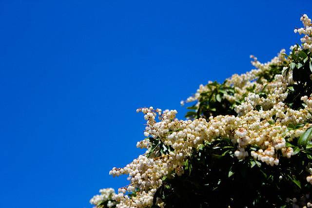 2014-05-04_00828_九州登山旅行.jpg