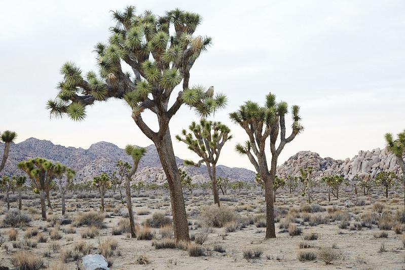 CA_Desert_0175