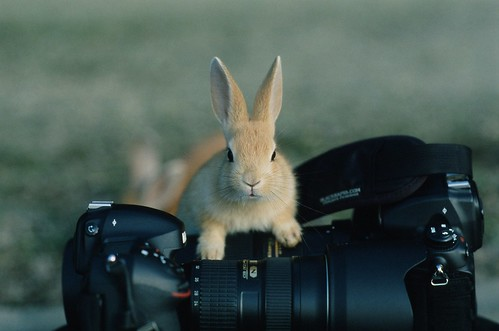 The bunny says that is my camera!