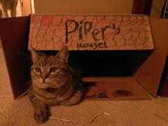 Feline ponderings...