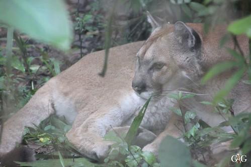 Zoo Karibikinsel Belize 19.11.2014 28