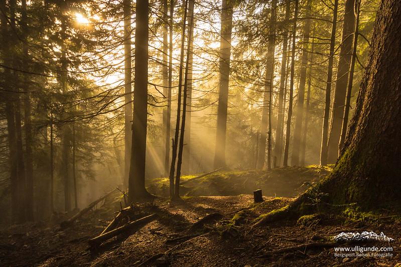 Nebel im Wald. Burgberger Hörnle, Obheiter, Allgäu.