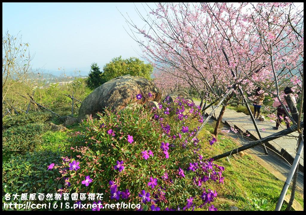 台大鳳凰自然教育園區櫻花DSC_5976