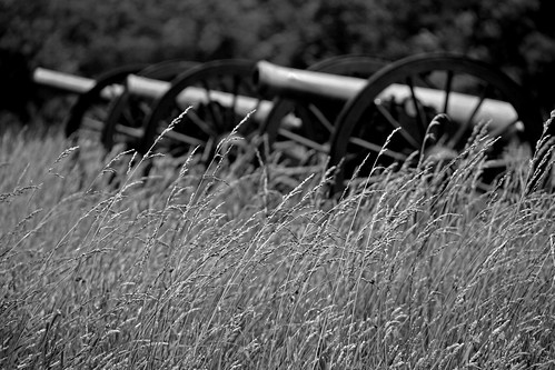 Cannons prowling in the grass