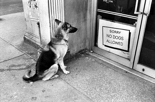 Jill Freedman, No Dogs Allowed, Greenwich Village, New York City, 1973
