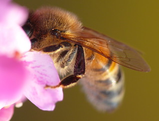Bee Focused