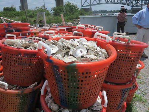 photo of baskets of oysters on a boat
