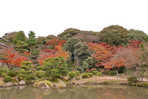 【写真】紅葉 : 法金剛院
