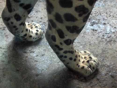jaguar legs