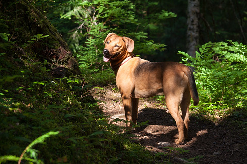 Woodland Brutus