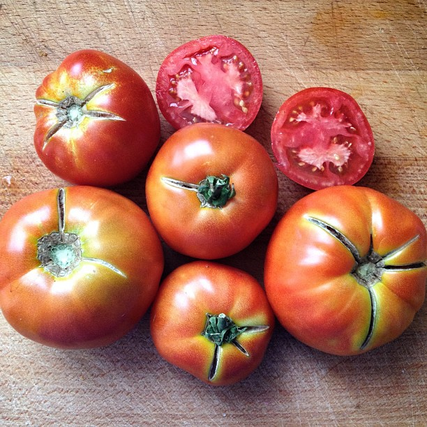 Tomates de #ElArenal en #Avila los mejores de la temporada #tomatesplásticoNO