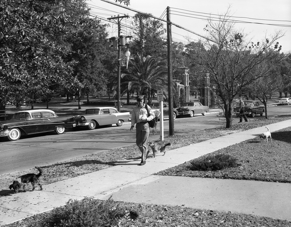 Mail carrier Charley Harris being followed by dogs in Tallahassee, Florida
