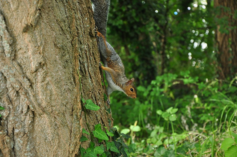 Squirrel on a Tree by Baker_1000