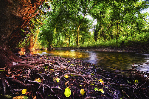 trees tree water river landscape nikon roots sigma nikond7000 sigma816