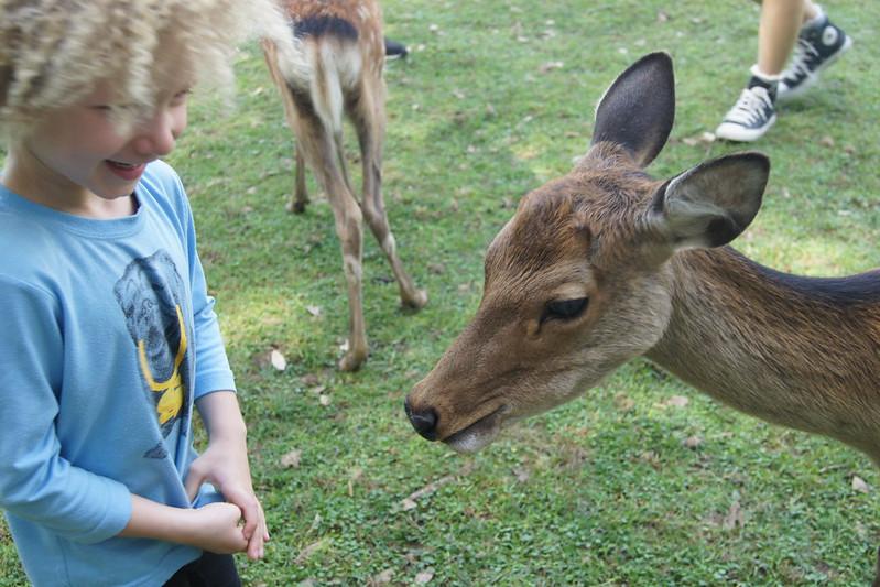 Nara Deer Park DSC03535