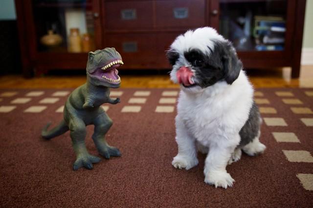 Rex vs. Rex
