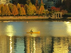 Golden morning paddle
