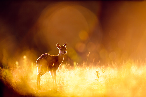 flare and bokeh