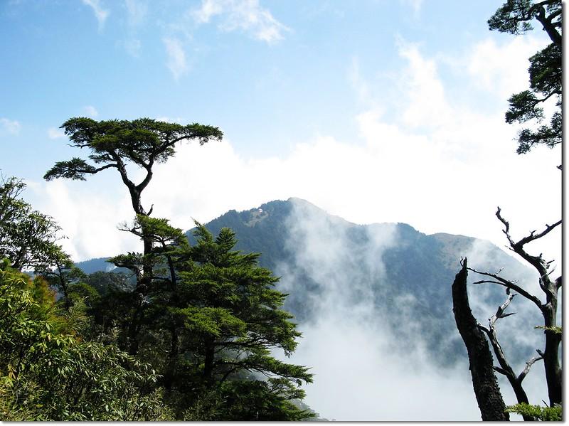 桃山、鐵杉 1
